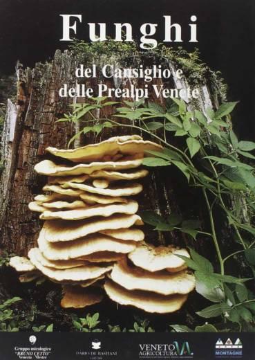 funghi-del-cansiglio
